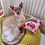 Siamese cat lying on a green cushion with a paw on a pink patterned honeysuckle cuddle cushion