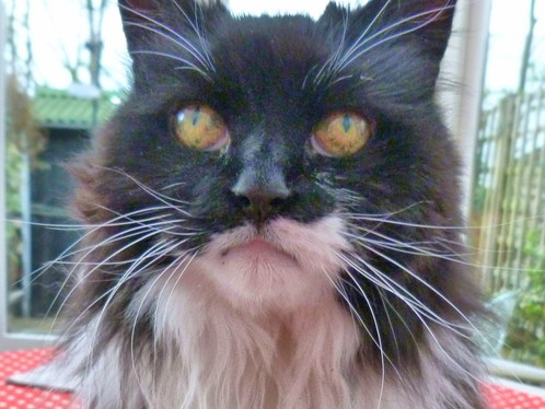 Feline Fossils - Caring for Old Cats