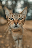 Curous Cat Blog. clay-banks-5py1uD3sxNA-