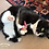 Black and white cat rolling on floor with a pink honeysuckle and catnip pouch with text Honeysuckle Cat Toys