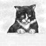 Drawing of an elderly black and white cat