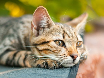 Facts About Male Cats