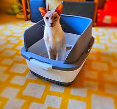 Billy Litter Tray.png