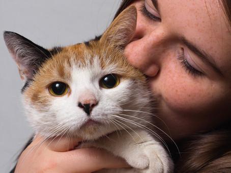 Do Cats Like Being Hugged?
