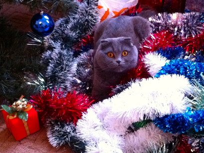 Cats Can Be Stressed at  Christmas Too...