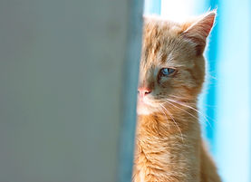 Sad looking ginger cat half hidden behind a door