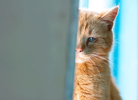 depression-in-cats-494239609.jpg