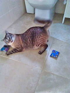 Tabby cat with funny expression playing with a honeysuckle catnip pouch on a bathroom floor