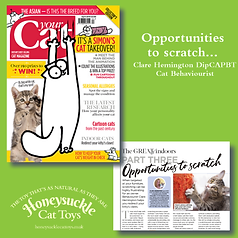 Your Cat Part 3 April 2019 Opportunities