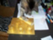Els Scholten's Cat Al Pacino #1.jpg