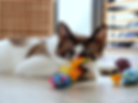 Cat playing with colourful toys