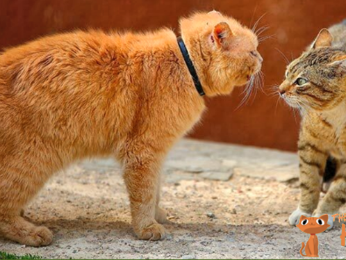 Is Your Cat a Bully?