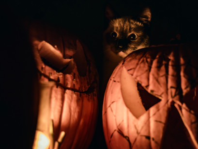 How Not to Frighten Your Family Feline at Halloween
