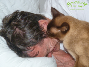 Cat with Owner in Bed