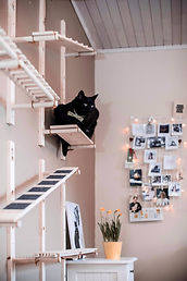 Cat high places. phil-carey-D5JVk31wWJw-