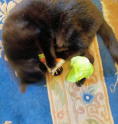 Blurry image of black cat playing with honeysuckle catnip pouch on a blue rug