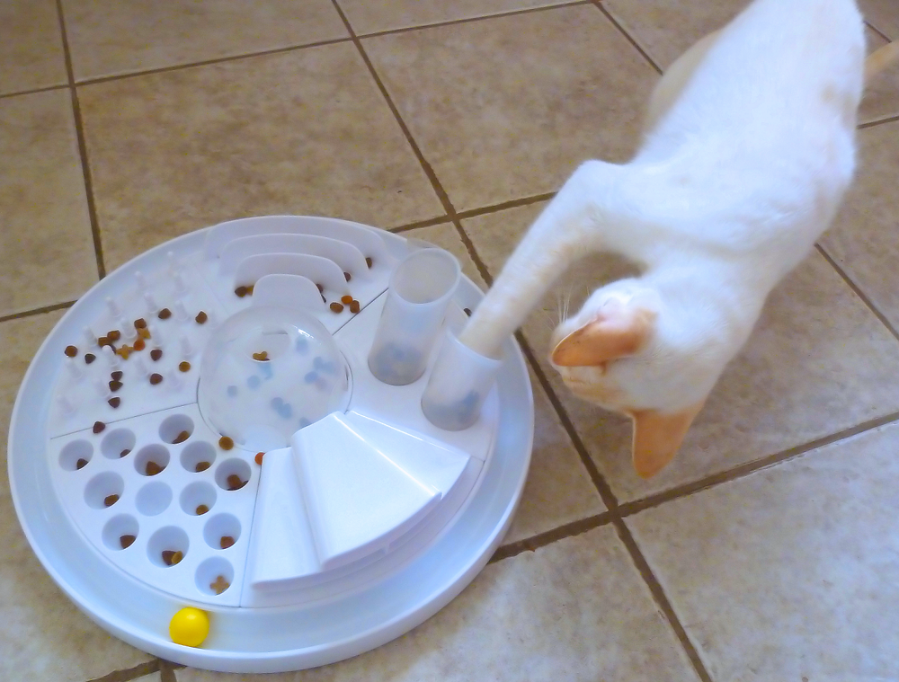 White Cat Using His Paw to Get Biscuits out of a Puzzle Feeder