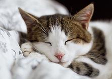 Cat sleeping. alexandru-zdrobau-_STvosrG
