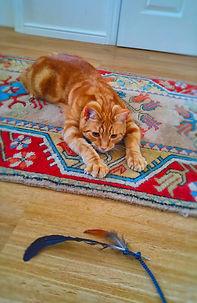 Cat Play.jpg