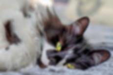 Content Cat. nick-fewings-_NgbLECQ6O8-un