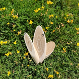 Three slices of tatarian honeysuckle wood lying on grass and buttercups