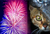 Fireworks Cat.png