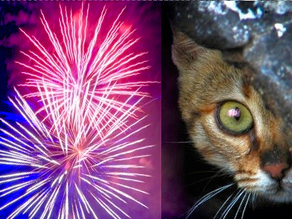 Ten Tips for Helping Your Cat through the Fireworks Season