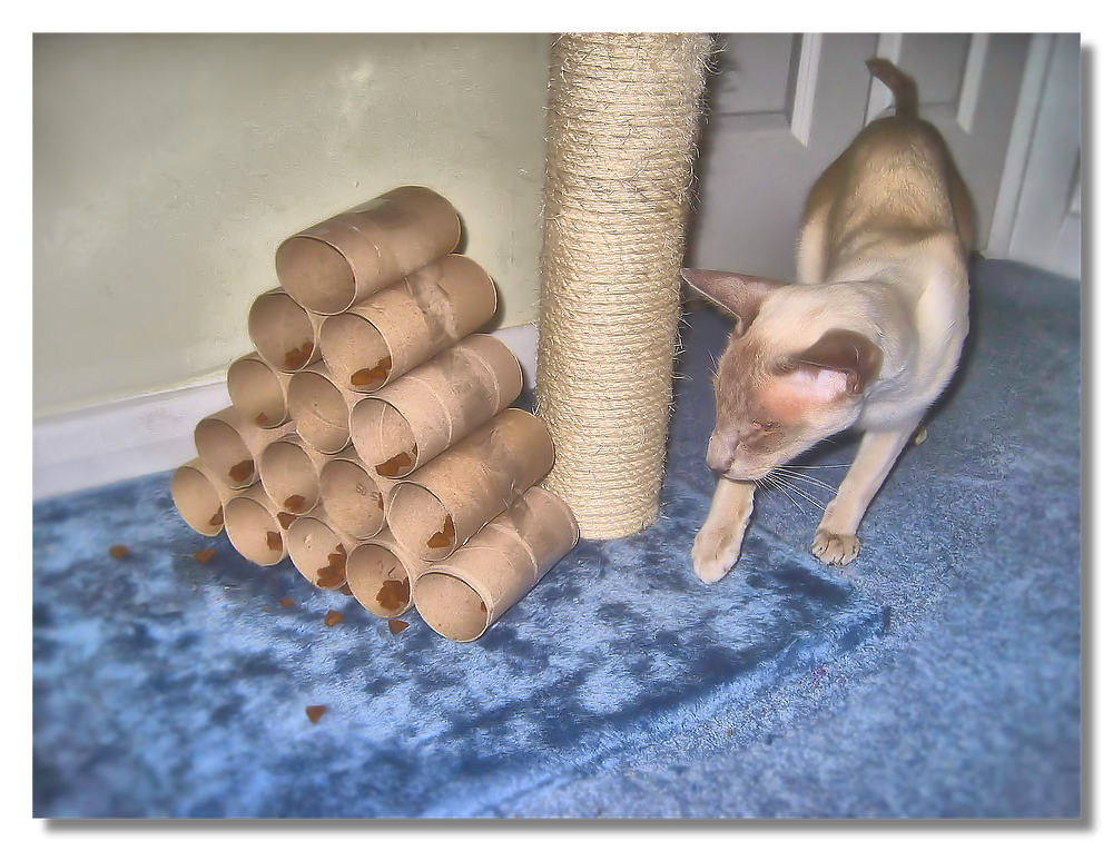 cat with toilet roll puzzle feeder