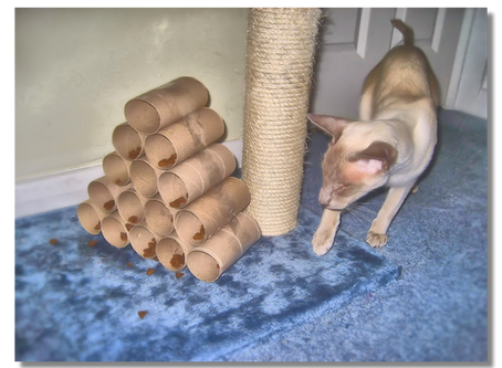 How To Make a Cat Puzzle Feeder