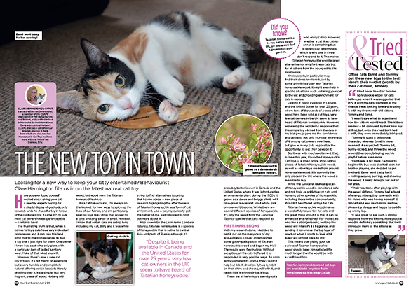 Your Cat Magazine Feature September 2018