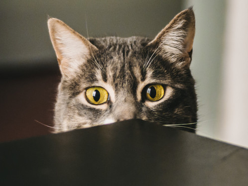 Do Cats Get Stressed?