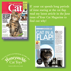 Your Cat Part 2 June 2020 Cat Flaps.png