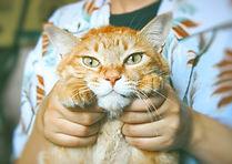Holding cat. tony-wang-00MAHmixauc-unspl