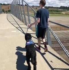 Beaumont aspiring as a Service Dog