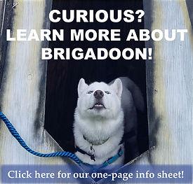 Brigadoon Auction Page-8.jpg