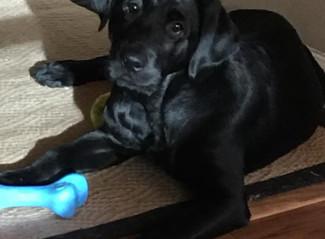 Puppy Raiser Nancy