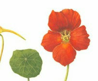 kate botanical.jpg