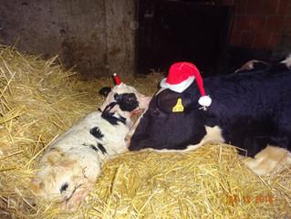 Weihnachtsgrüße vom Schafhof