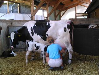 Unsere Kuh Dixi ist im Club der 100.000 l Kühe.