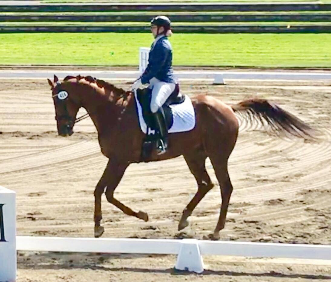 OTTB to dressage horse.  Go  Möbius strip!!