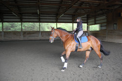 Boerg and William at the canter