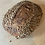Thumbnail: Sunflower Fig Batard
