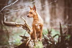 Norfolk-Dog-Photographer-0007.jpg