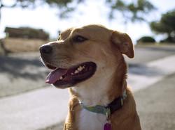 summer-dog-vibes-doge.jpg