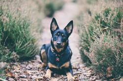 Norfolk-Dog-Photographer-0001.jpg