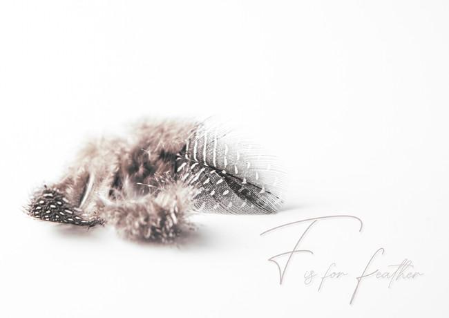 F is for feather3-rosa_veldkamp-1.jpg