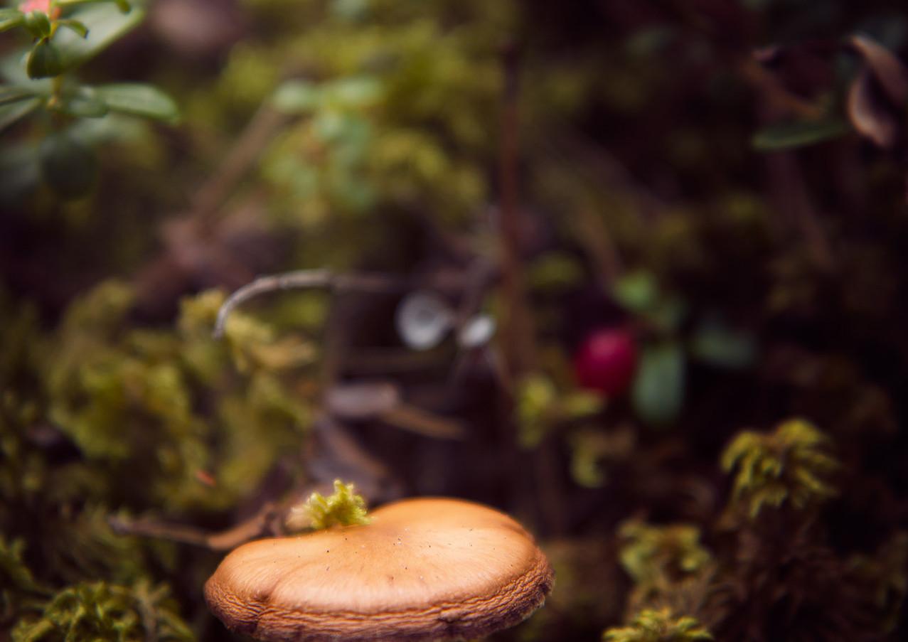 mushroom in moss-Rosa_veldkamp-1.jpg