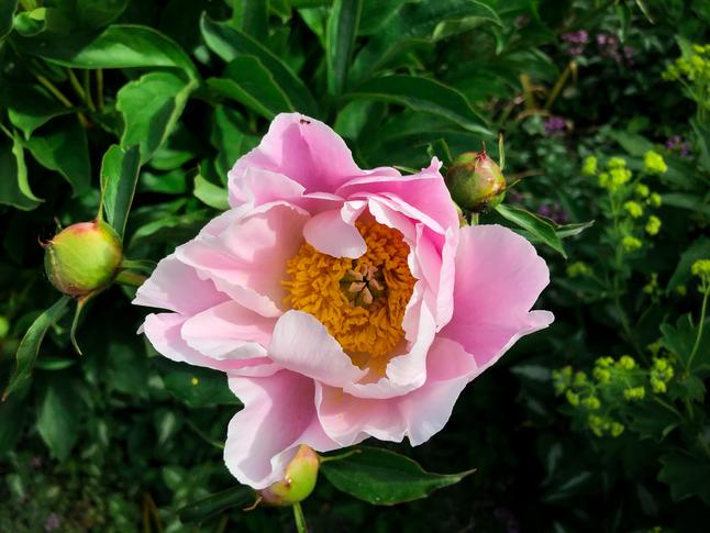 Monday Morning Tea and a Garden Tour