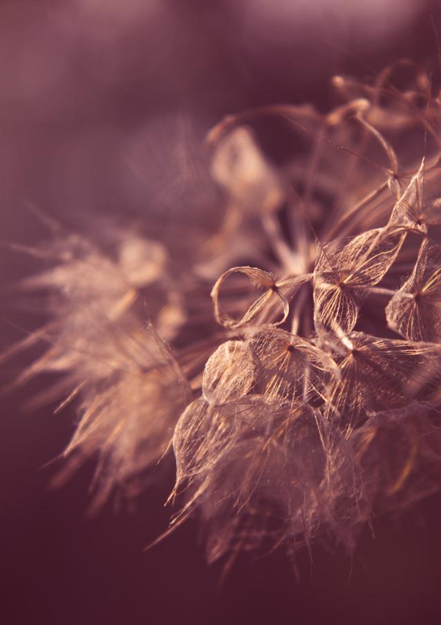pink fall seed head-Rosa_veldkamp-1.jpg