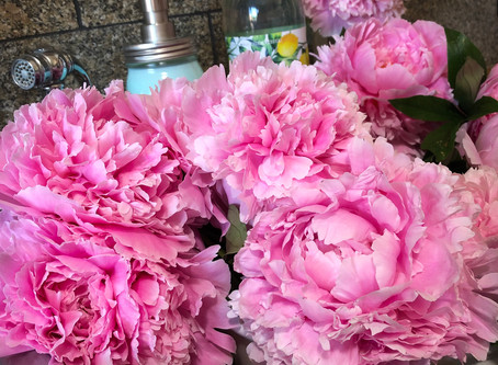 An extravagance of peonies